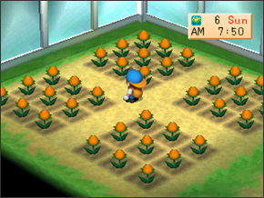 Crops and Wild Plants   Harvest Moon: Back to Nature Guide